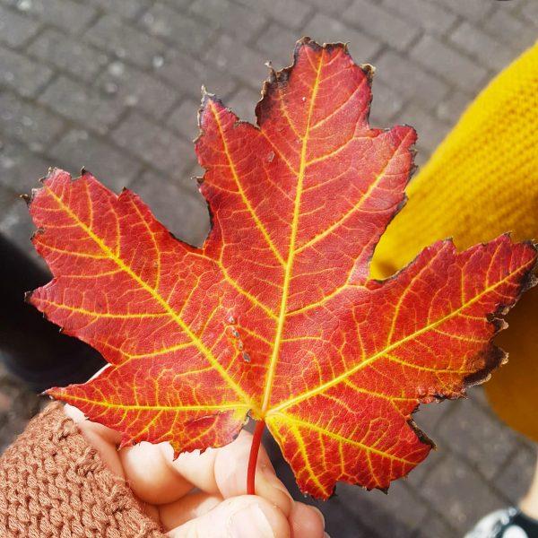 AutumnLeafWM